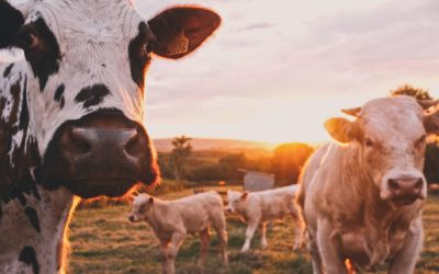 Energy solutions designed for the farming industry